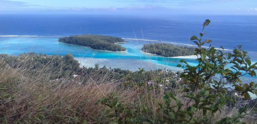 Land 36800m2 Located in a Private Island in Moorea French Polynesia