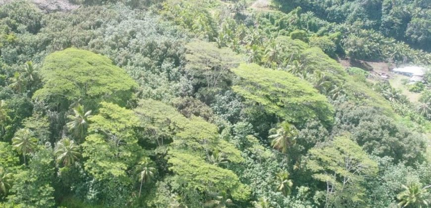 A vendre 11 Hectares à Tahaa