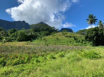 A vendre 1,3 hectares C/Mont. route des ananas, Paopao, Moorea